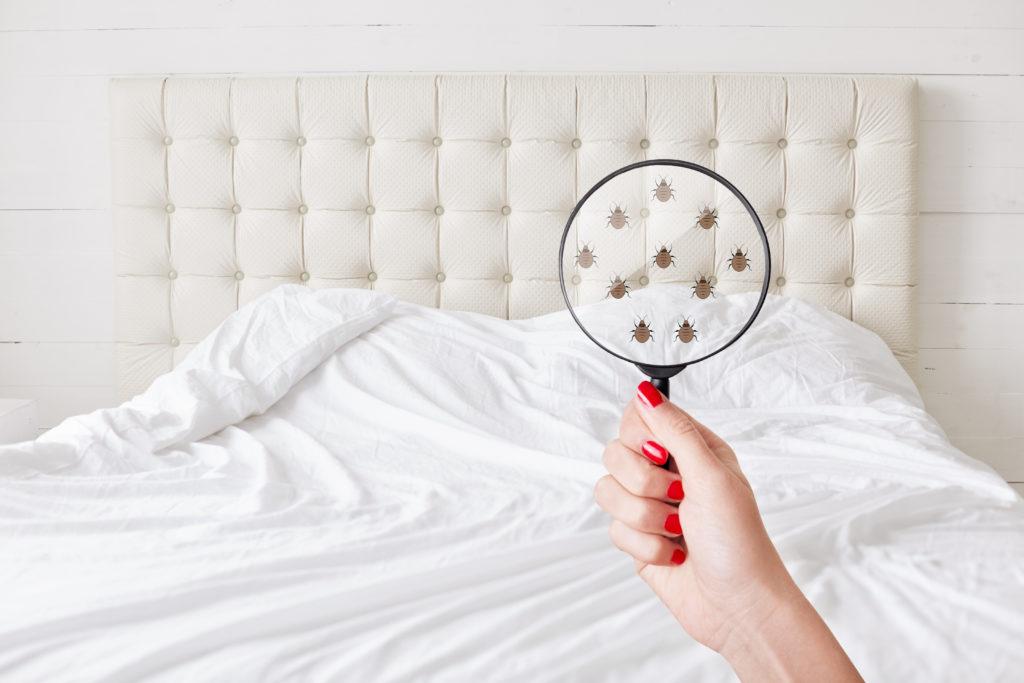 bed bug exterminator stillwater